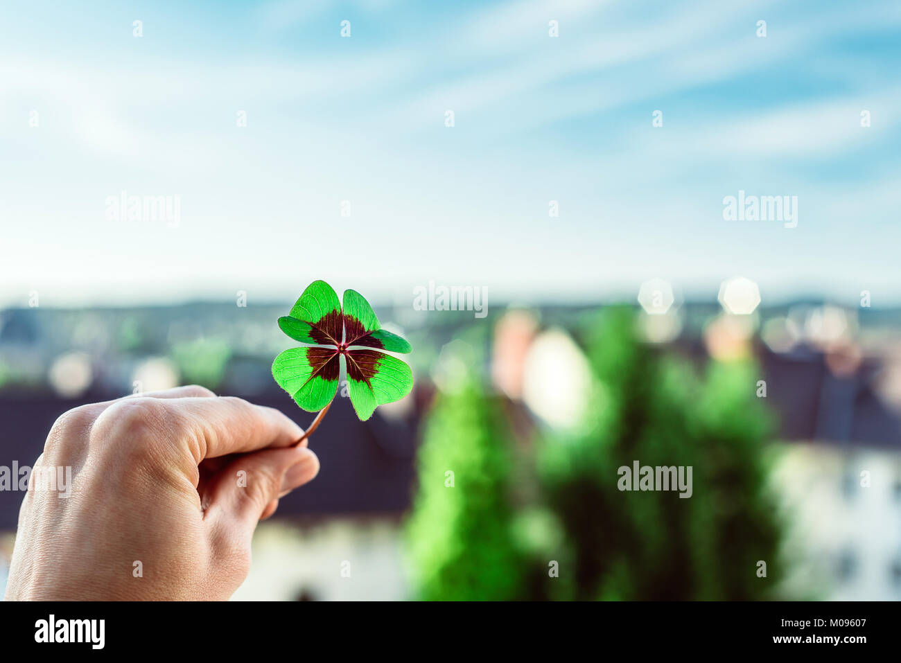 Closeup of a four leaf lucky clover held by a hand against skyline as template Stock Photo
