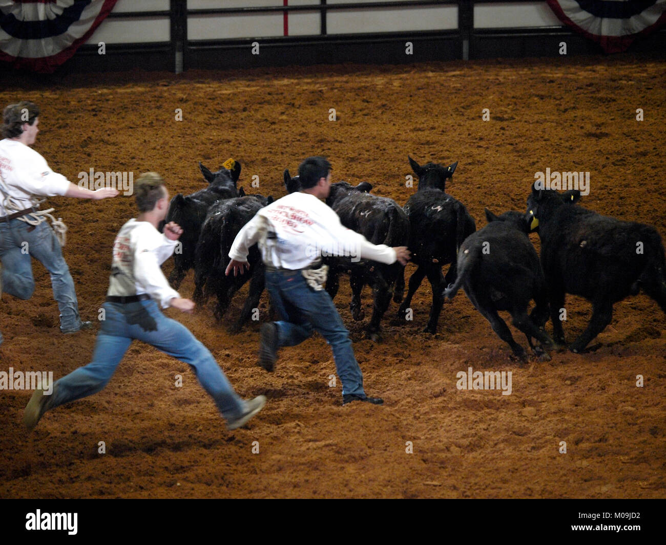 Fort Worth, USA. 19th Jan, 2018. Members of the Future Farmers of America and the 4-H chase calfs to win scholarship - Stock Image