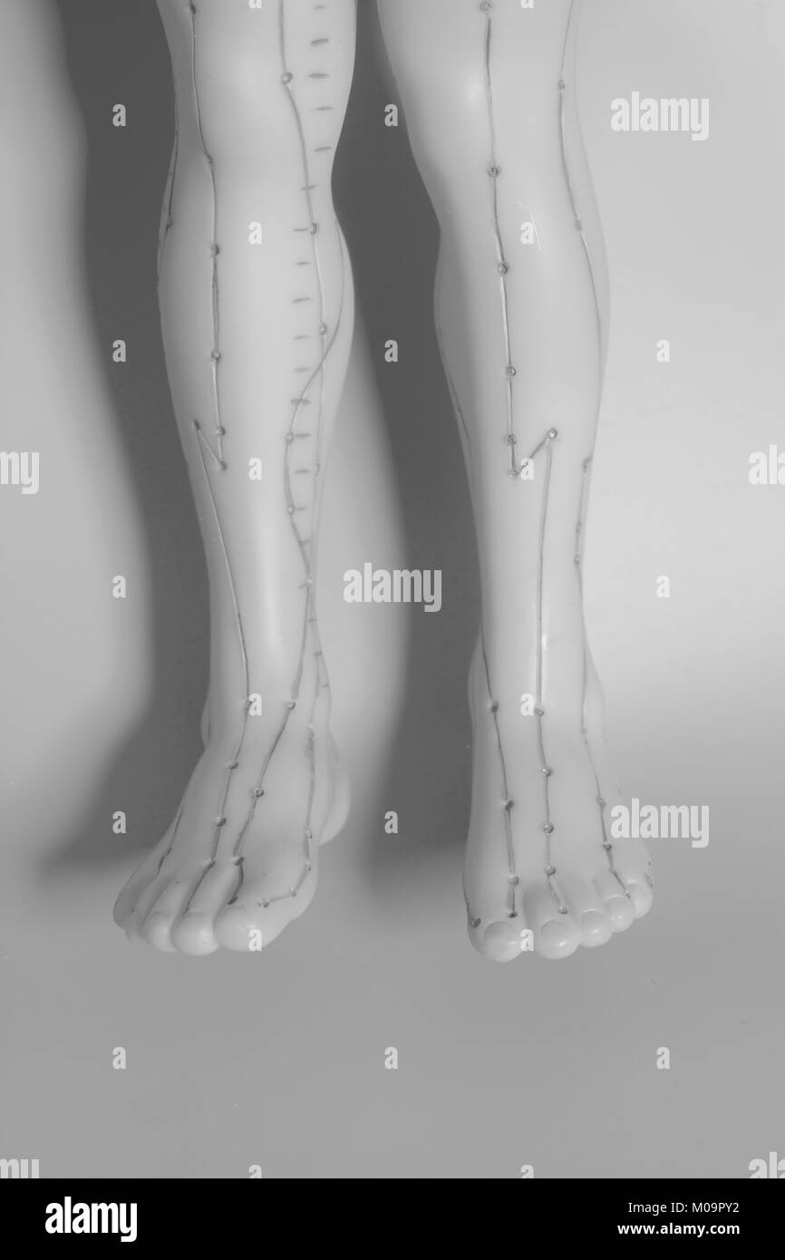 Medical acupuncture model of human feet on gray background - Stock Image