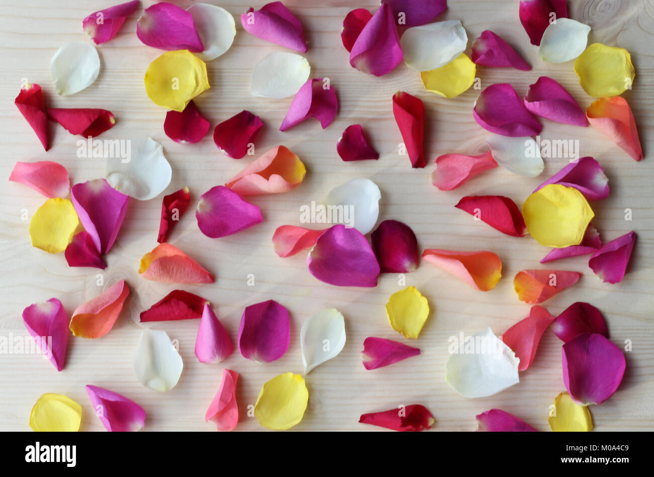 multi colored rose petals scattered on a bright wooden table Stock Photo