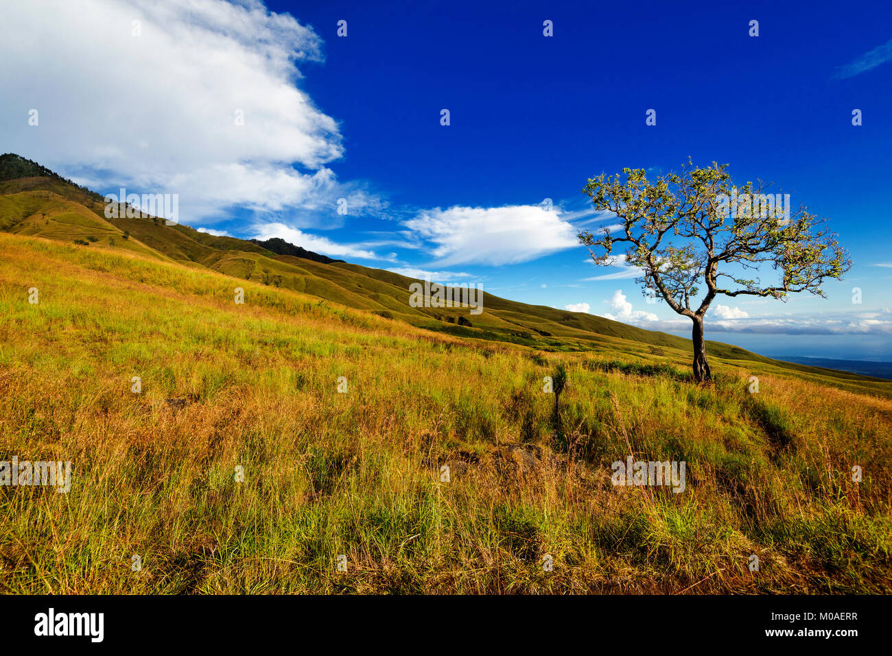 Lone tree and moving clouds in mountain, Indonesia - Stock Image