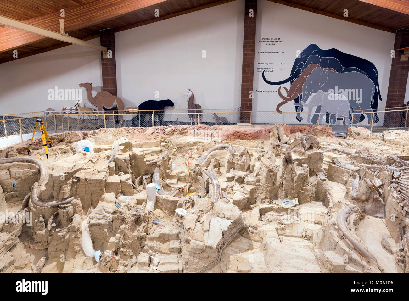 Fossil beds, Mammoth Site, Hot Springs, S. Dakota, USA, by Dominique Braud/Dembinsky Photo Assoc - Stock Image