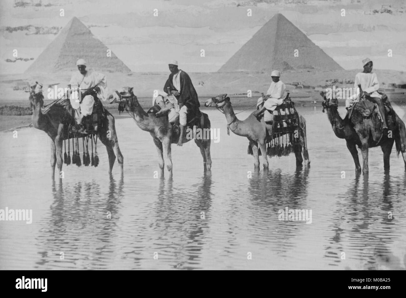 Camels with Native Riders on board stand in reflective floodwaters with a backdrop of the Pyramids of Giza In Egypt - Stock Image