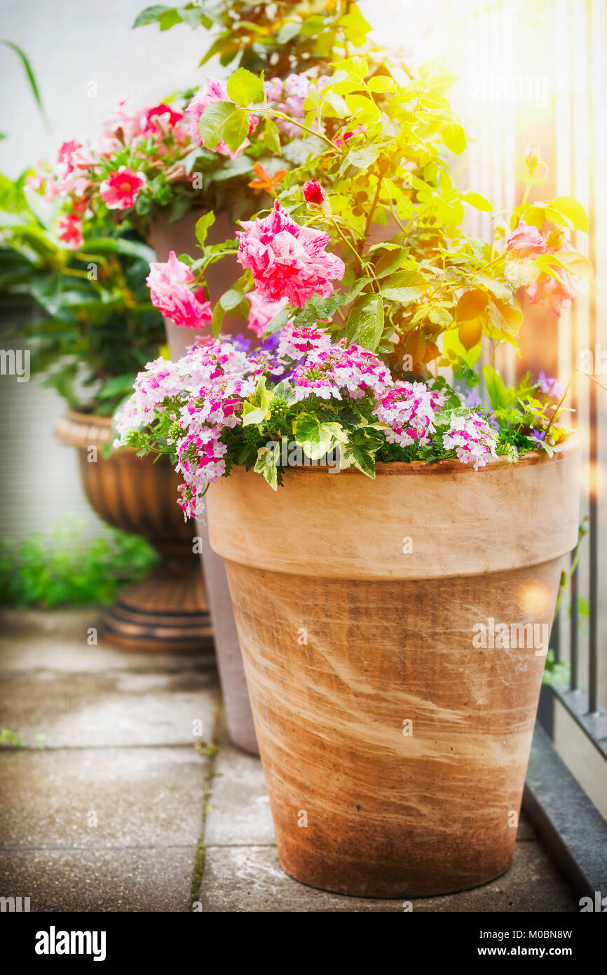 Pretty balcony with potted white flowers stock photos pretty pretty patio or balcony pot with container flowers roses and verbena in sunlight container mightylinksfo