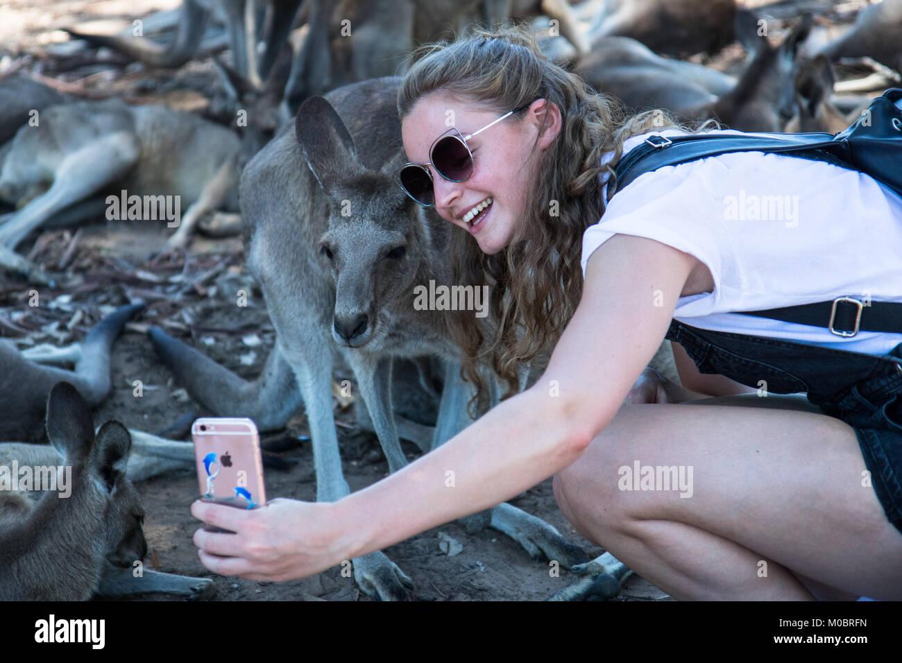 Young woman takes selfie with kangaroo at Brisbane Koala Sanctuary - Stock Image