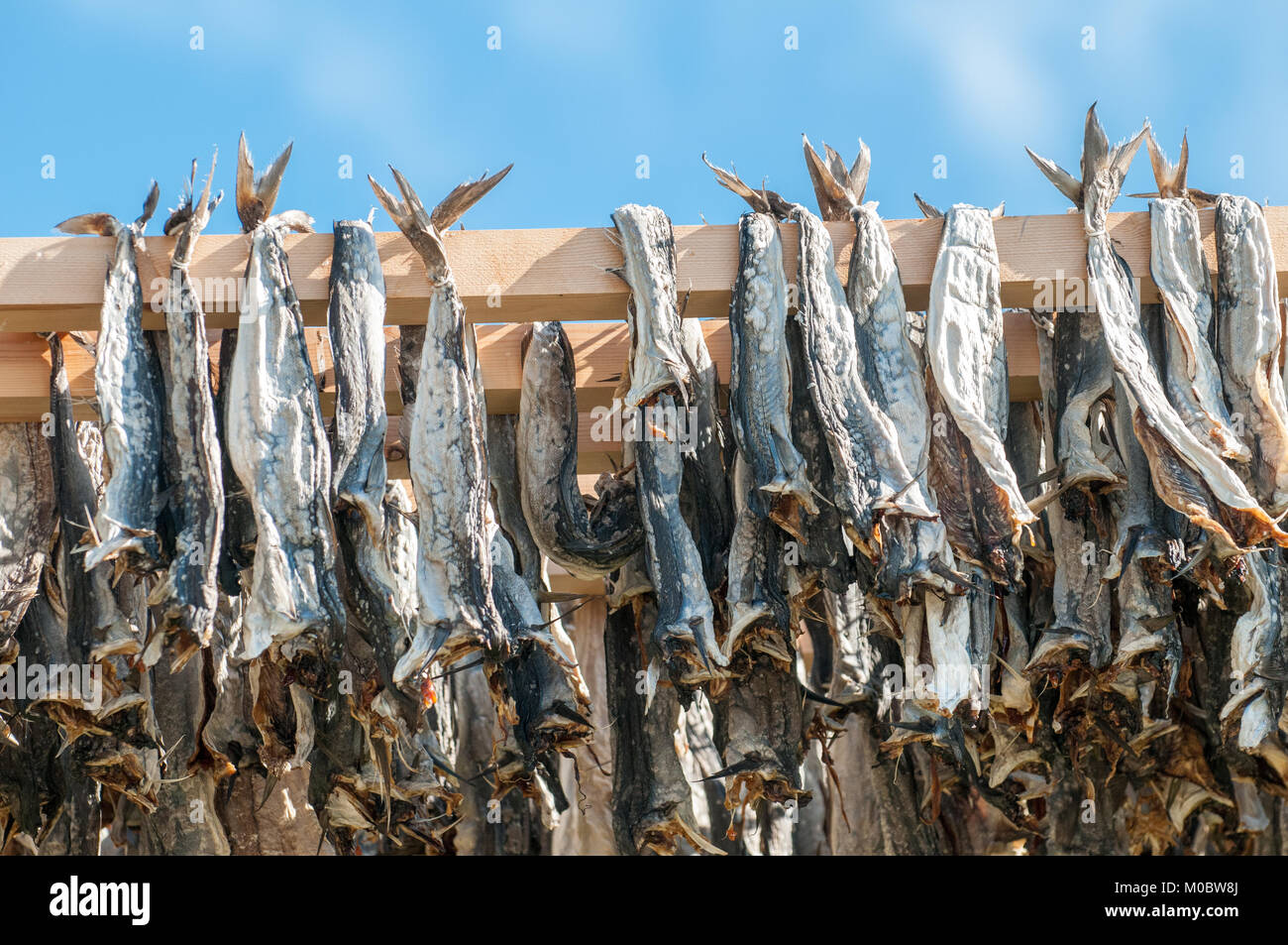 Typical drying flake for Stockfish in Lofoten, Northern Norway. Drying food is the world's oldest preservation - Stock Image