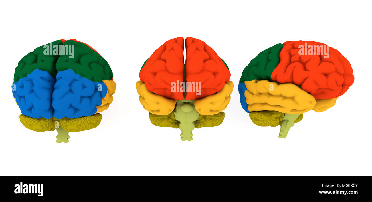 3d brain illustration and colored areas - Stock Image
