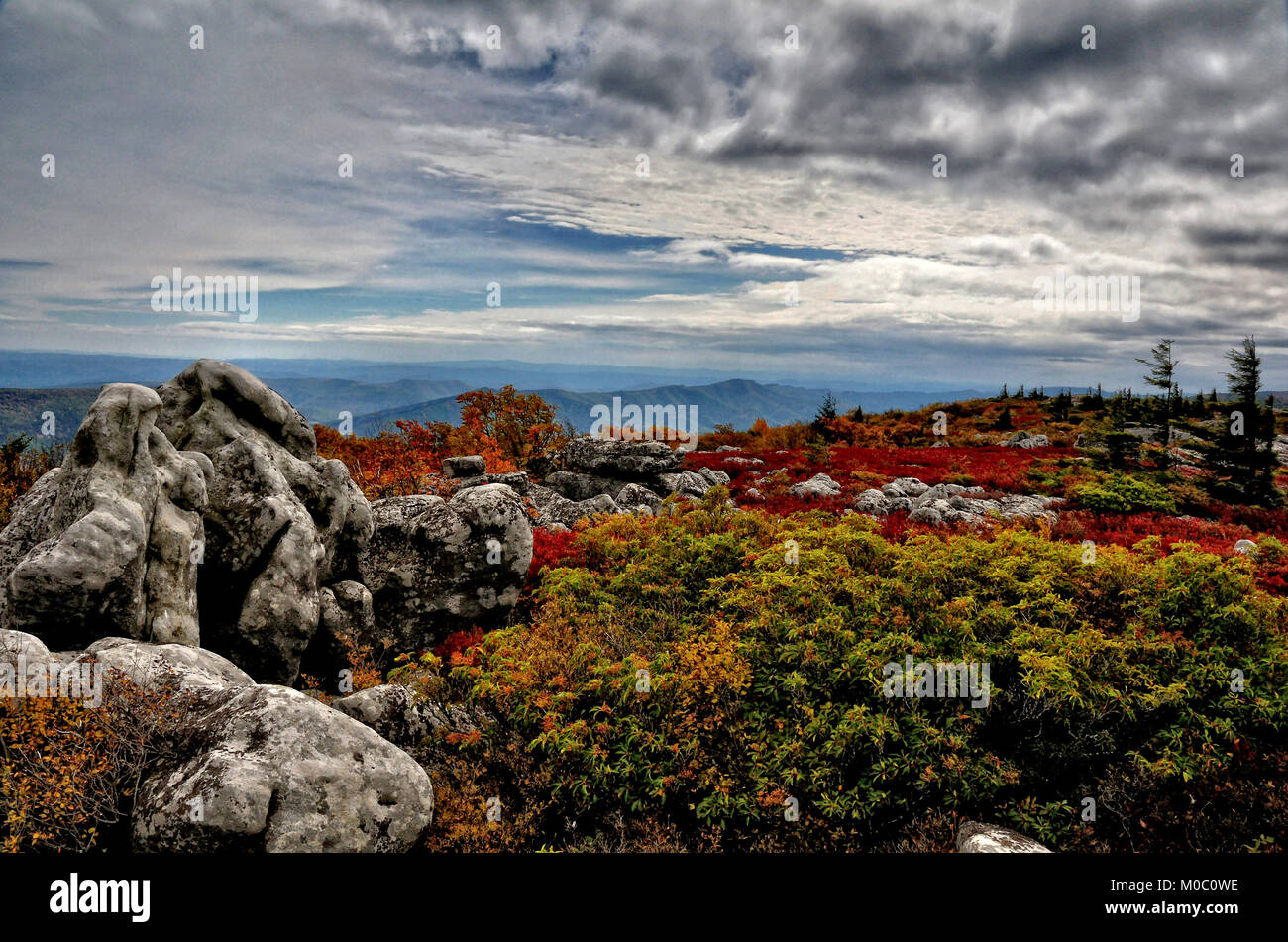 Dolly Sods heath lands in autumn color West Virginia - Stock Image