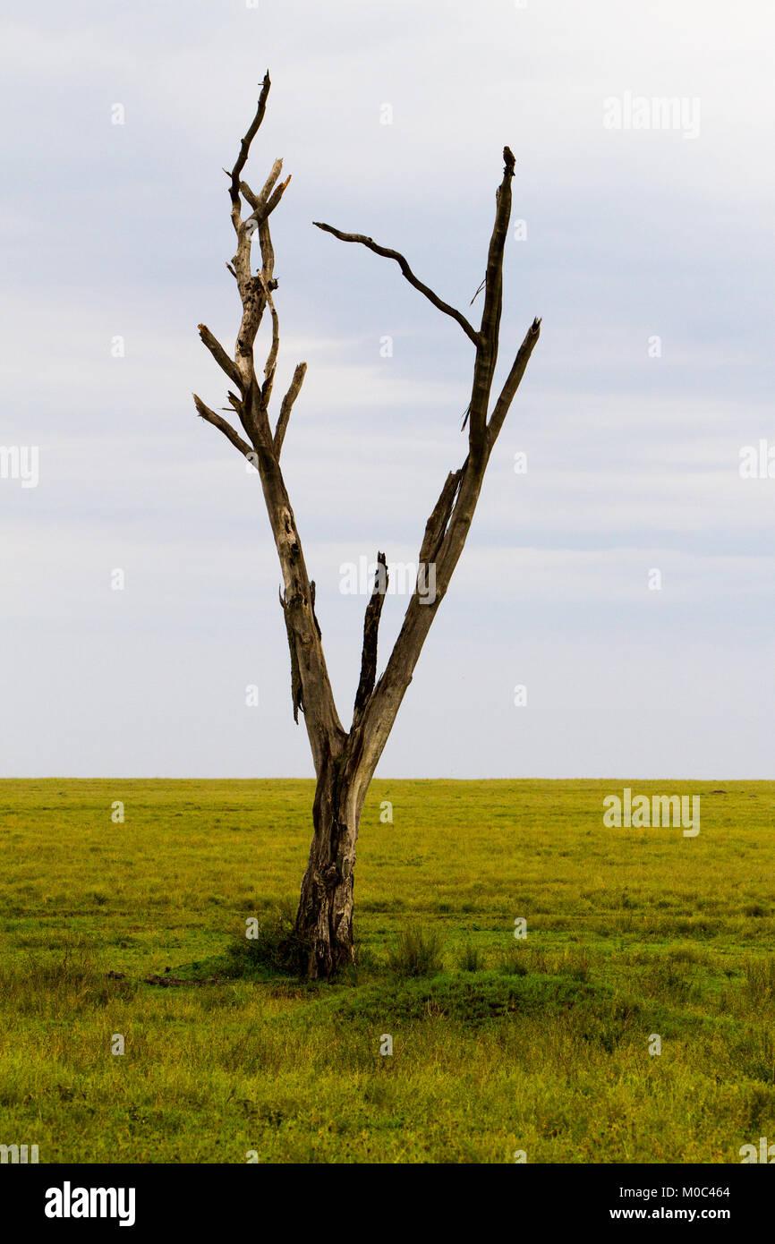Serengeti National Park, Tanzanian national park in the Serengeti ecosystem in the Mara and Simiyu regions - Stock Image