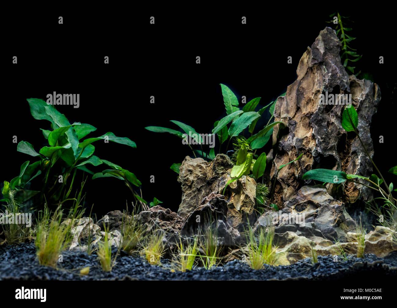 A Shot Of The Fluval Flex 57 Aquascape Stock Photo Alamy