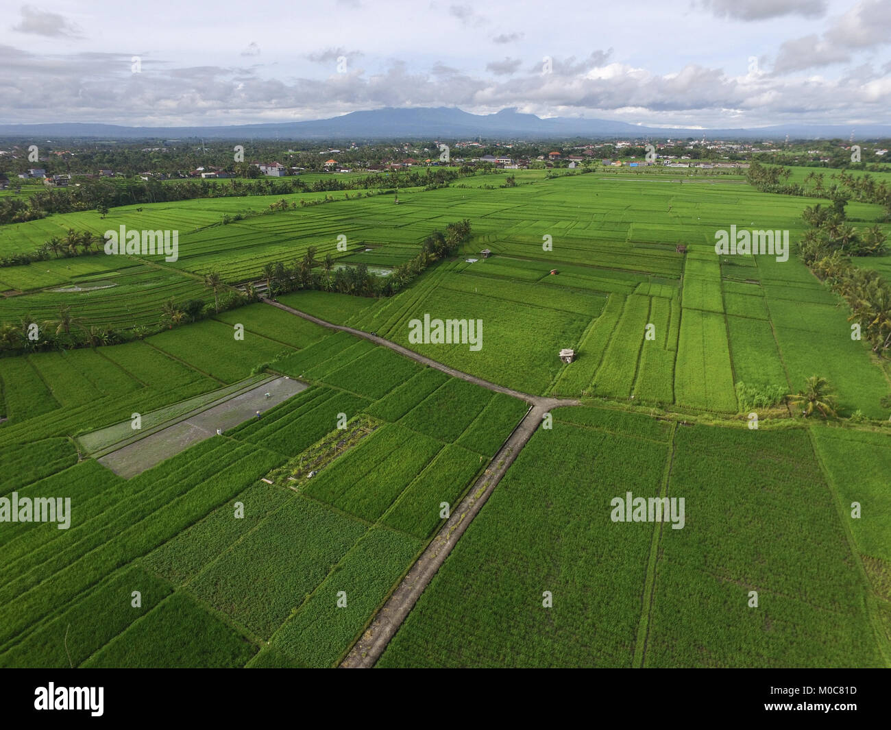 Landscape of Tabanan - Stock Image