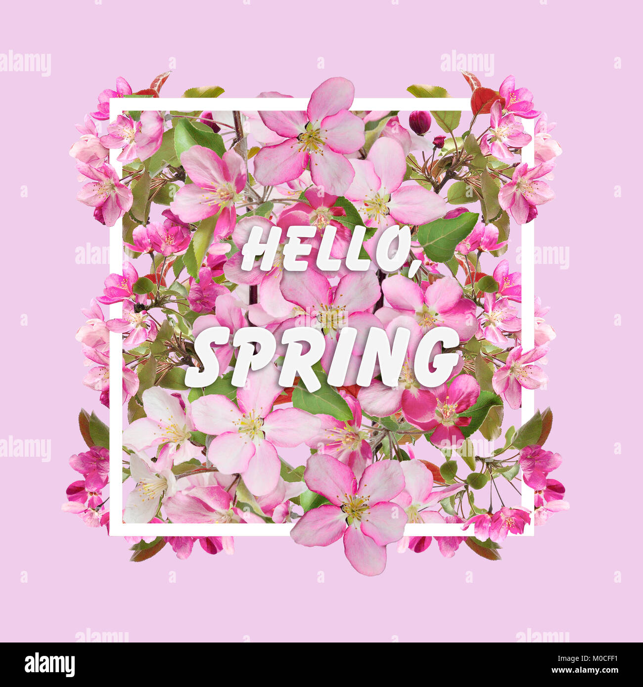 Floral Spring Design With Cherry Blossom Flowers In The White Stock