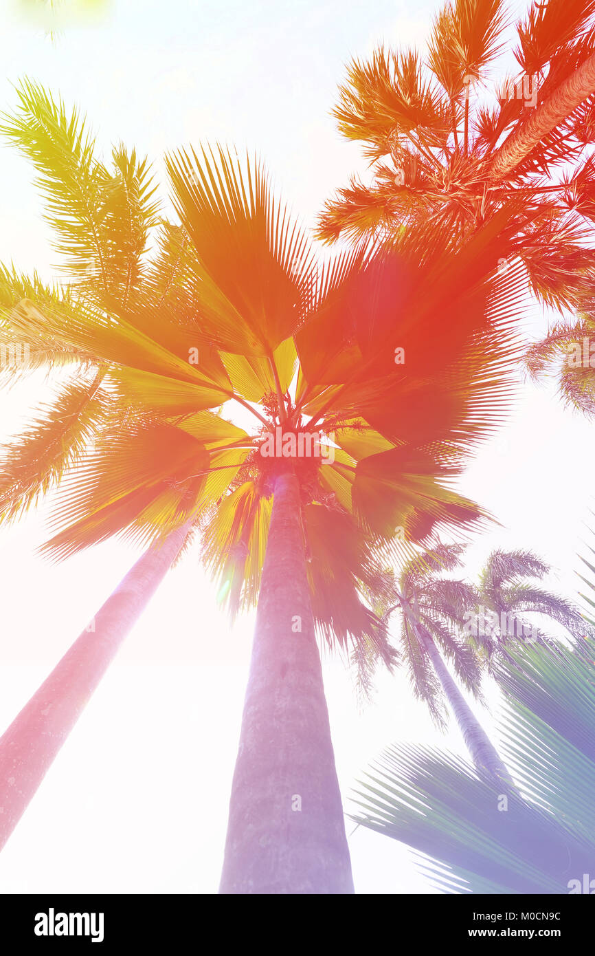 Palm trees at sunset light, at tropical coast,made with Vintage Tones,Warm tone - Stock Image