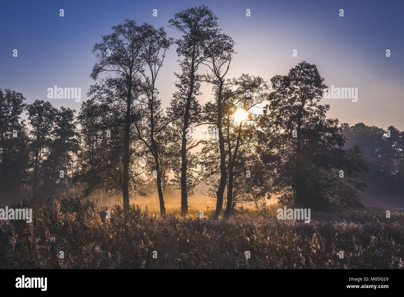 Sunrise in Gorki village, Sochaczew County on the edge of Kampinos Forest, large forests complex in Masovian Voivodeship - Stock Image