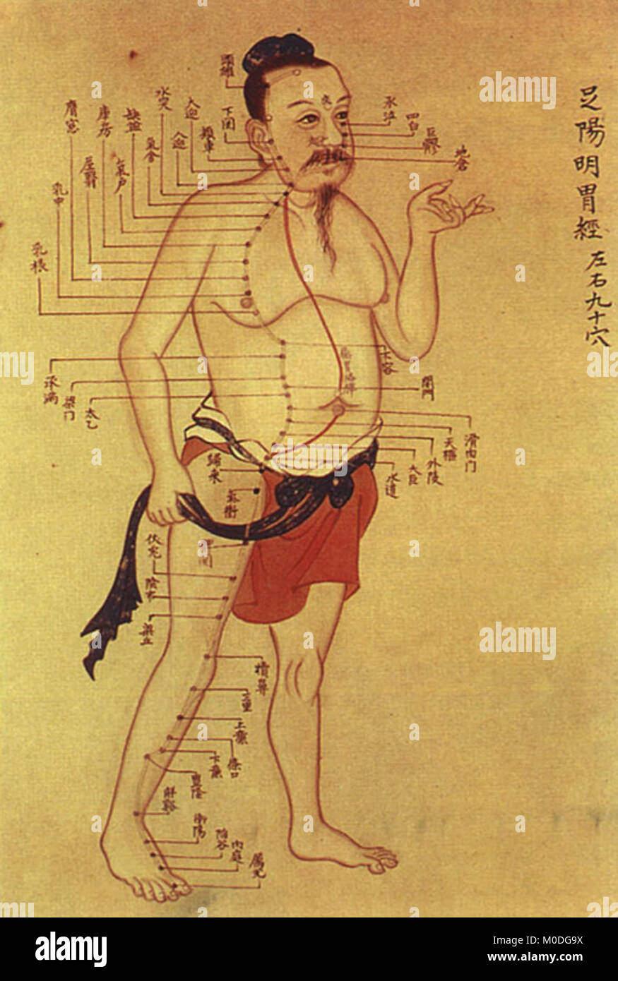Old Chinese Medical Chart On Acupuncture Meridians Stock Photo