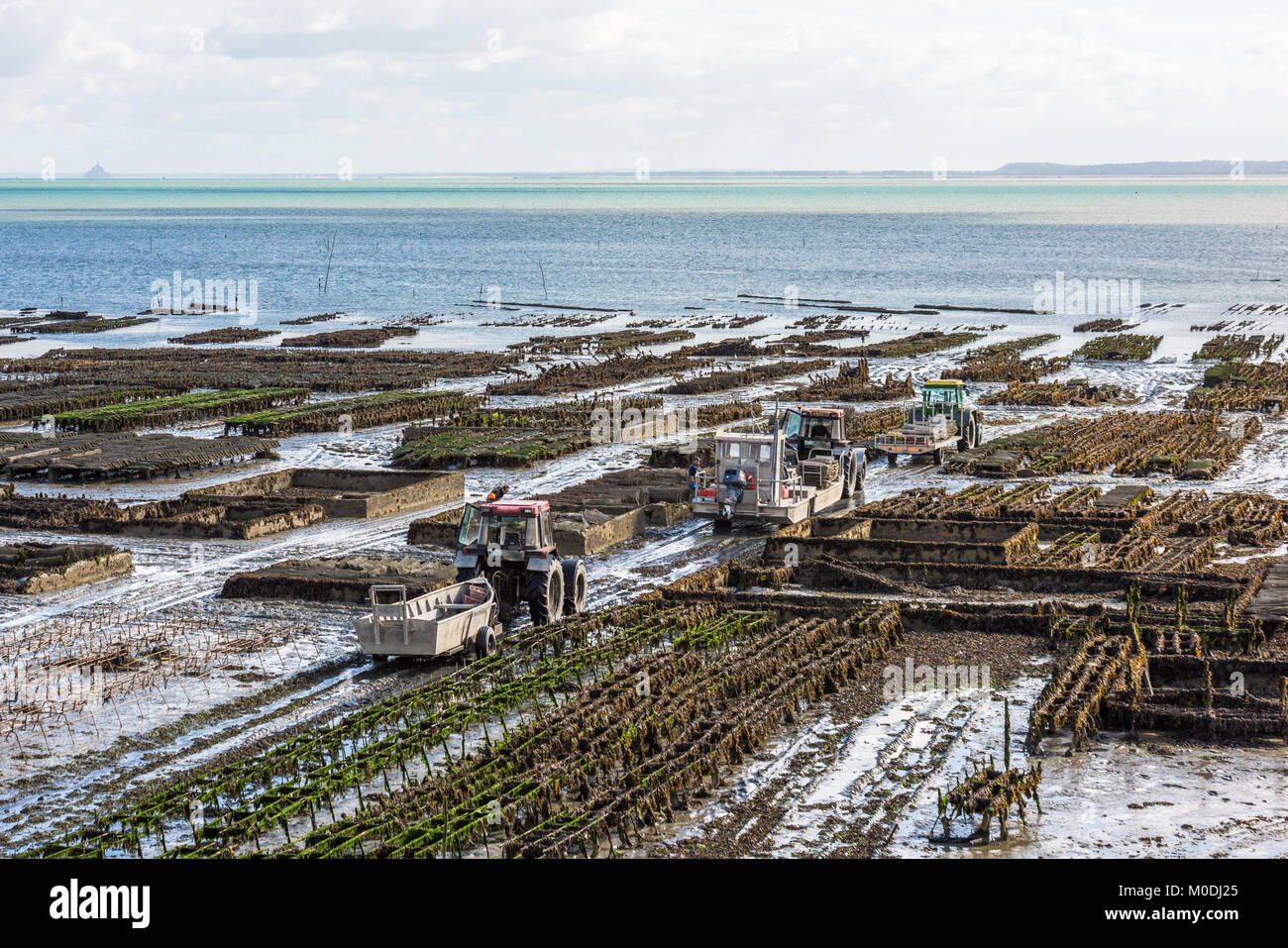 Oyster farms in Cancale, Brittany, France Stock Photo