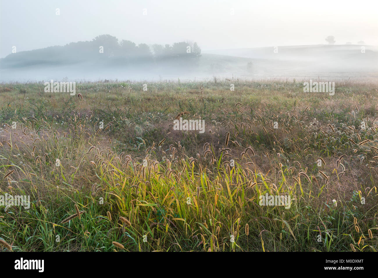 Morning fog, Whitetail Woods Regional Park, Dakota County, MN, USA, Early September, by Dominique Braud/Dembinsky - Stock Image