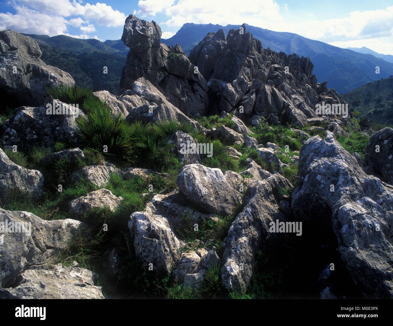 Libar, Serranía de Ronda, Málaga, Andalucia, Spain, Europe - Stock Image
