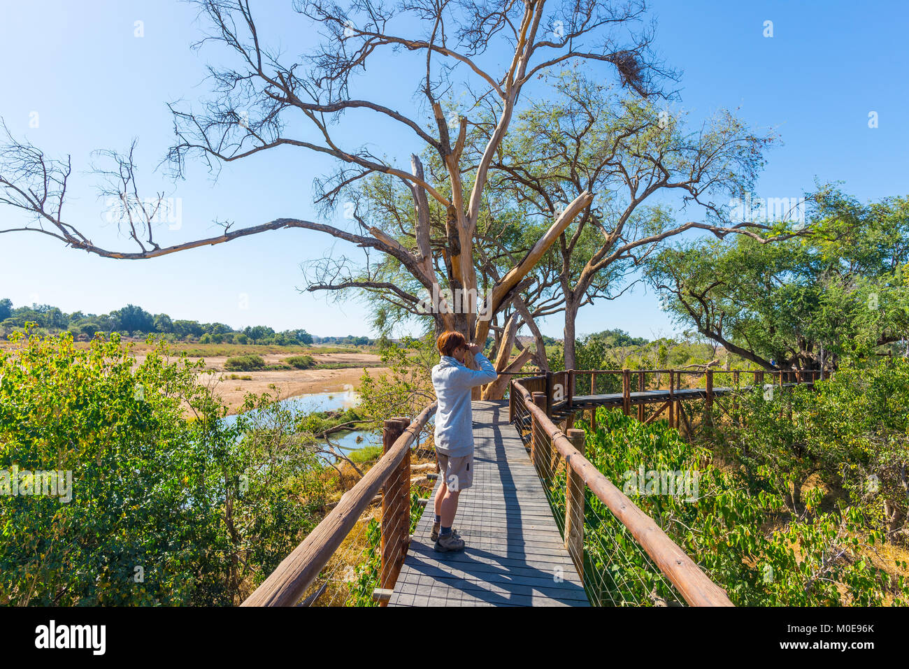 Tourist looking at panorama with binocular from viewpoint over the Olifants river, scenic and colorful landscape - Stock Image