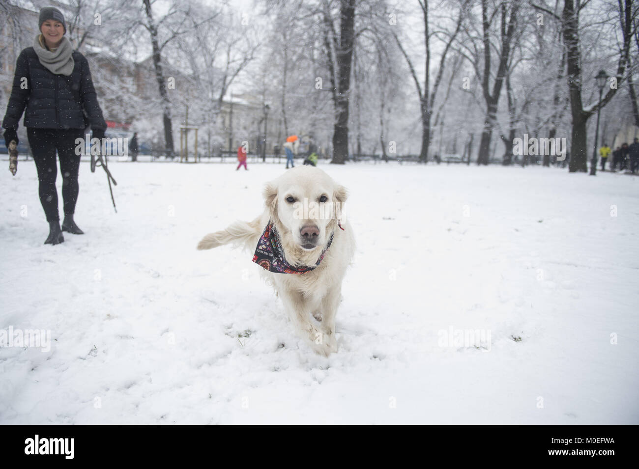 Krakow, Poland. 21st Jan, 2018. A dog plays in snow during winter in ...