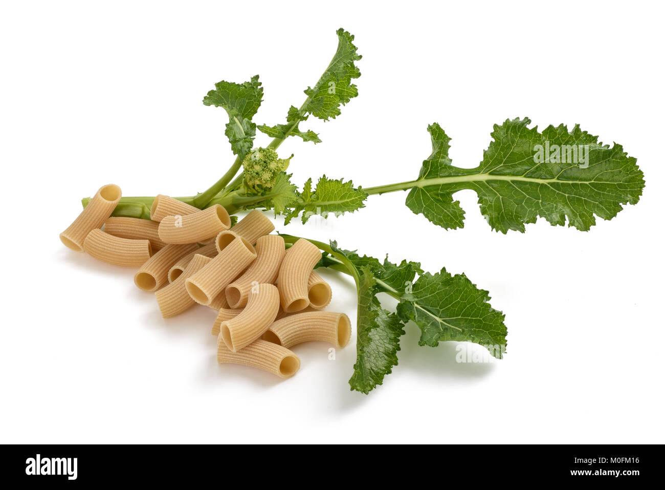 Fresh turnip greens with pasta isolated on white background - Stock Image