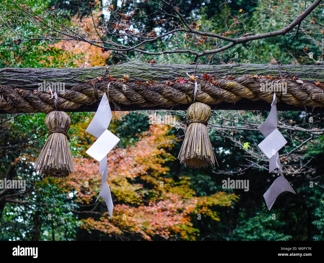 Ancient wooden torii of Shinto Shrine with nature background in Kyoto, Japan. - Stock Image