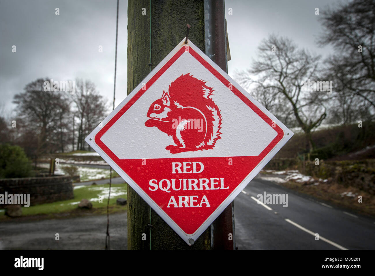 Signs for the start of the red Squirrel area near Hawes in the Yorkshire Dales National Park. - Stock Image
