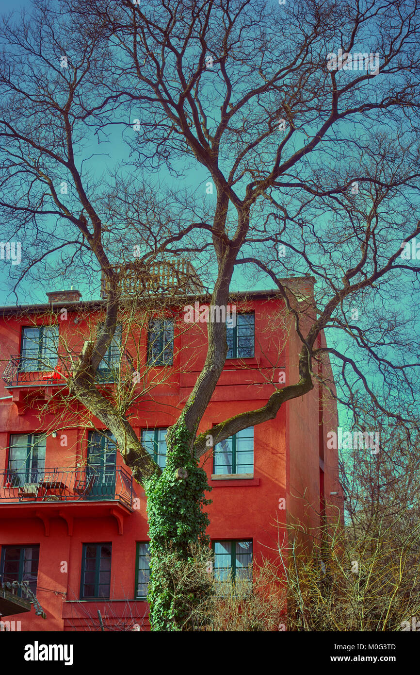 Dead tree against red brick city house - Stock Image