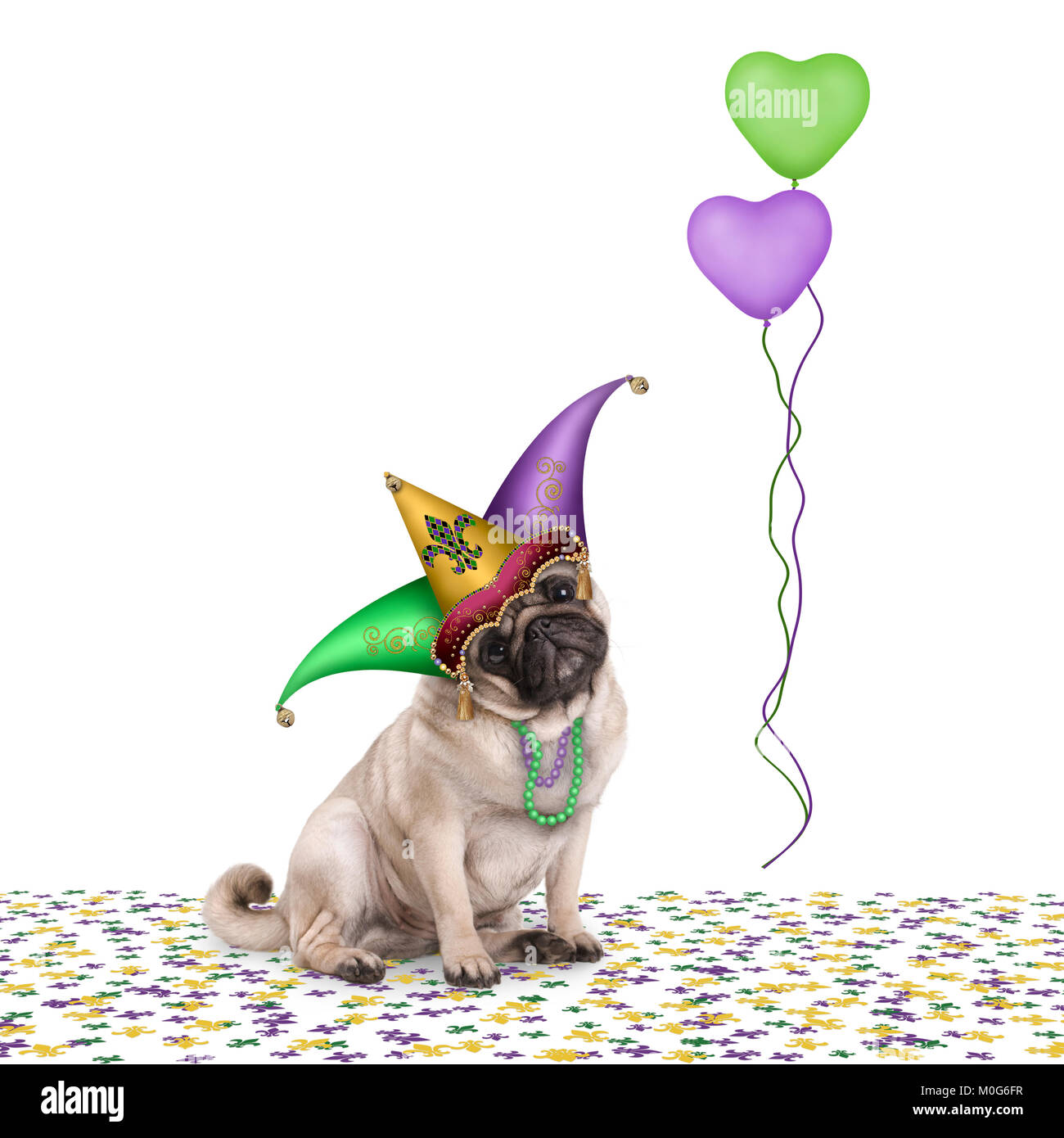 cute Mardi gras carnival pug puppy dog sitting down on confetti with harlequin jester hat and balloons, isolated - Stock Image