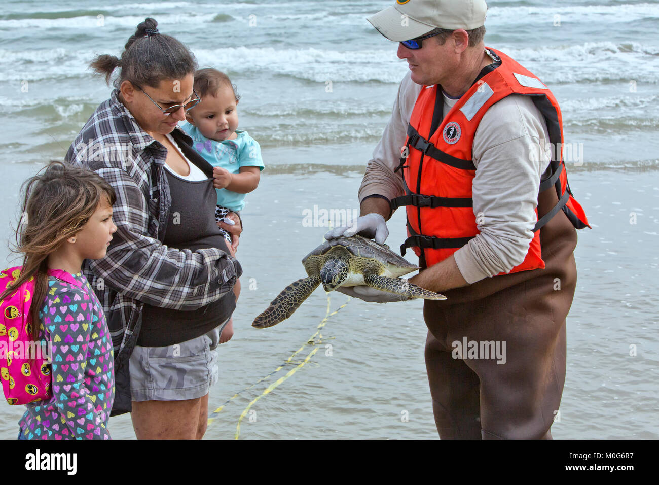 Volunteer carrying Kemp's Ridley Sea Turtle 'Lepidochelys kempii' to the public attending the release - Stock Image