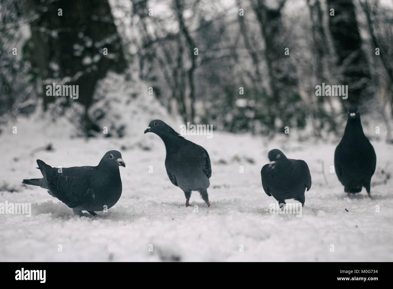 The bird gang - Stock Image