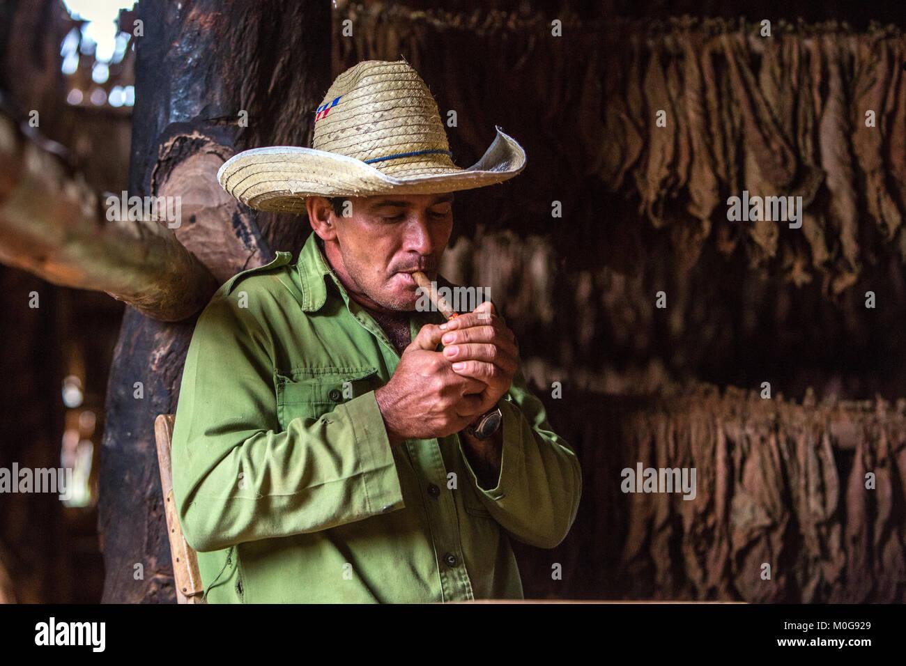 Tobacco farmer in Vinales Valley, Cuba - Stock Image