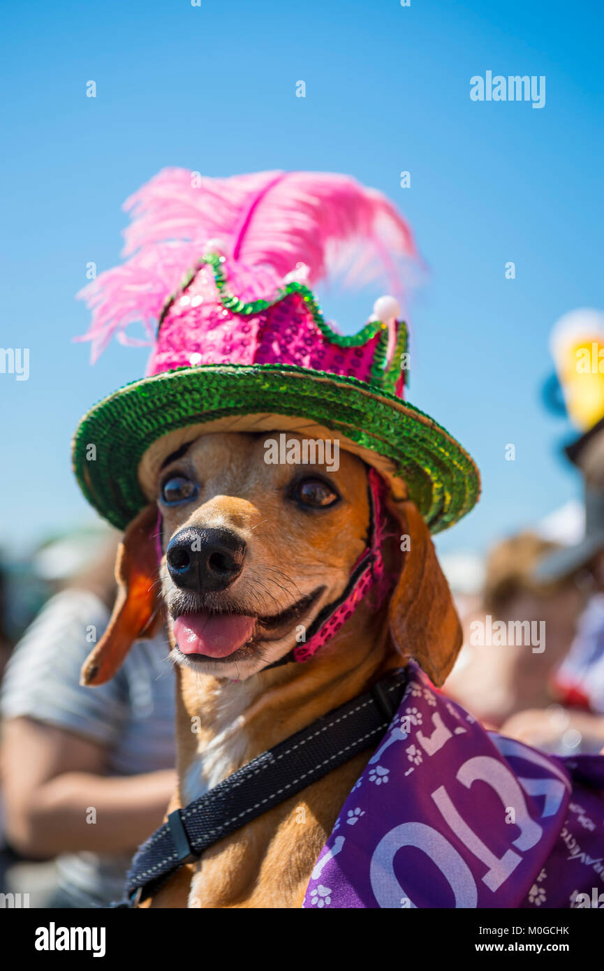 RIO DE JANEIRO - FEBRUARY 19, 2017: A dog wearing a colorful sequined hat celebrates Carnival at the annual Blocão - Stock Image