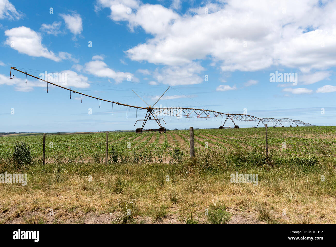 Blanco George Western Cape South Africa. December 2017. Irrigation sprinkler watering crops on a farm in the Blanco - Stock Image