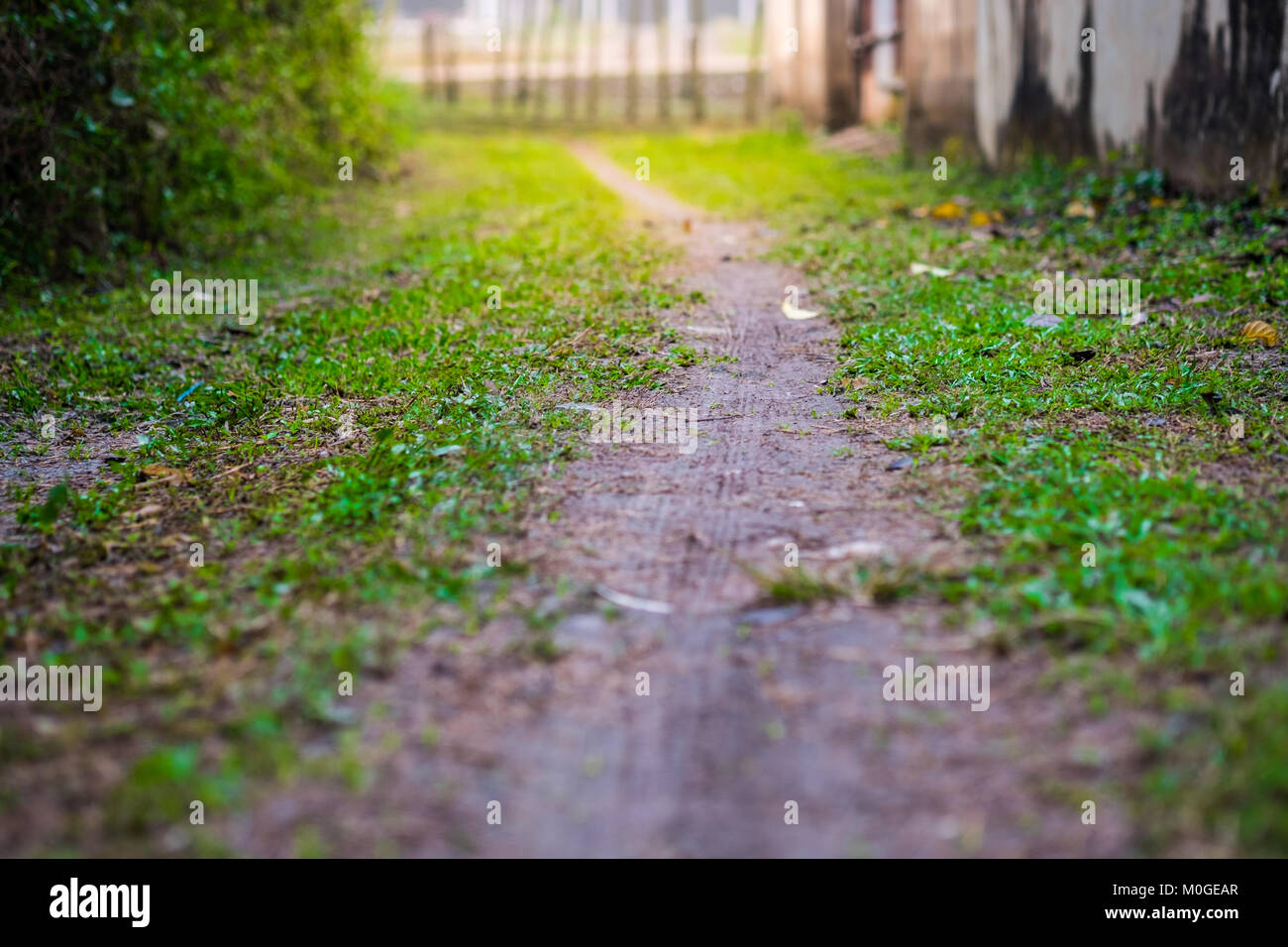 A small grass walkway and ground. Amidst the shady and beautiful nature in horizontal view with flare light effect Stock Photo