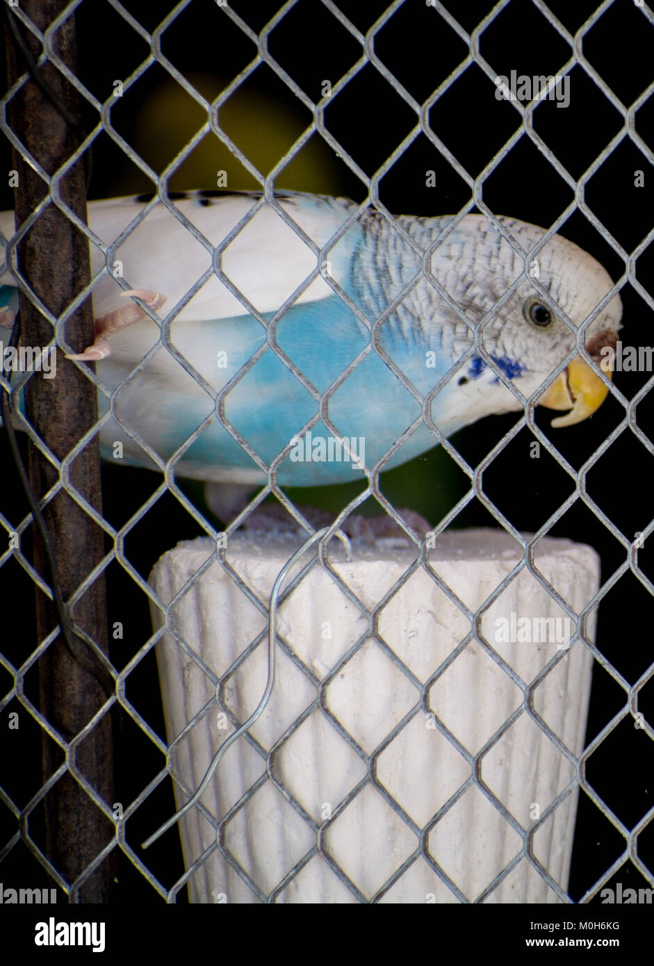 Parrot In Cage Stock Photos & Parrot In Cage Stock Images - Alamy