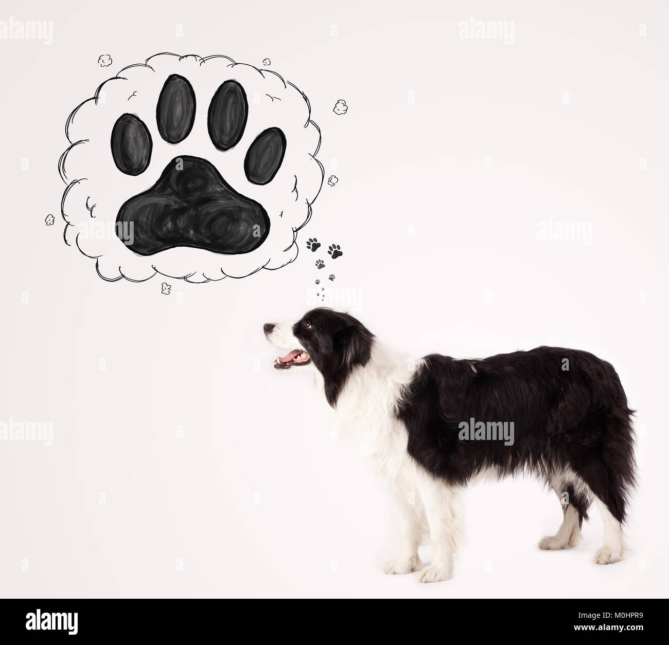 Cute black and white border collie thinking about a paw in a thought