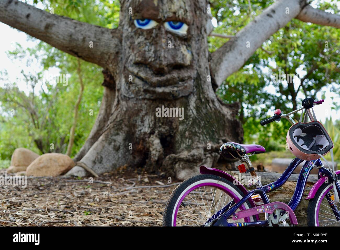 Large blue eyes and face on a tree, Billy the bombax tree, Anderson Park Botanic Gardens, Townsville, Queensland, Stock Photo