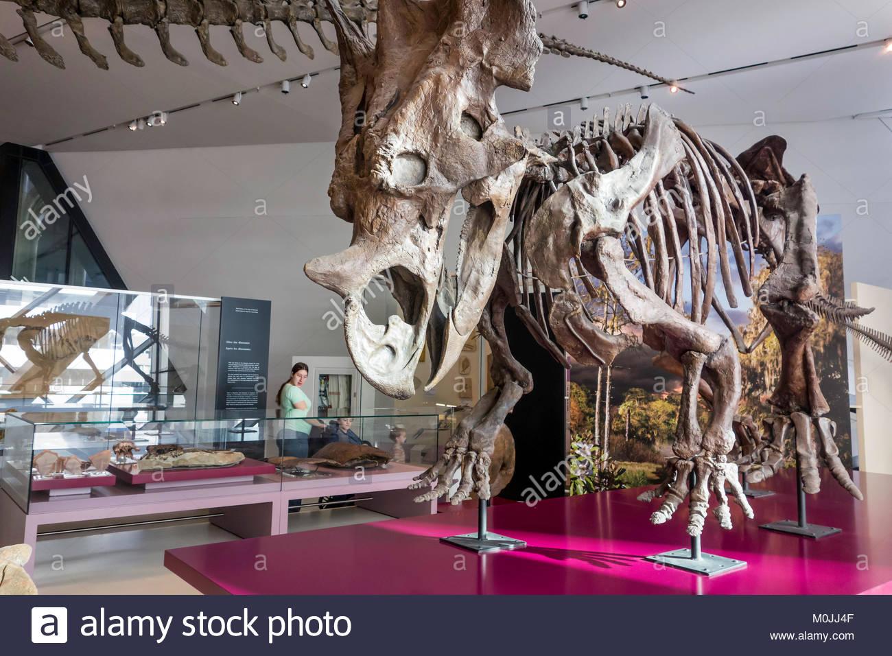 Royal Ontario Museum ROM dinosaur skeleton Toronto Ontario Canada. - Stock Image