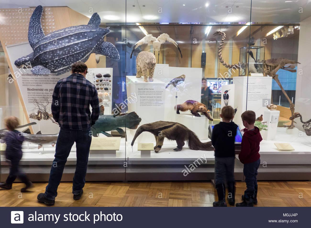 Royal Ontario Museum ROM species at risk exhibit family Toronto Ontario Canada. - Stock Image
