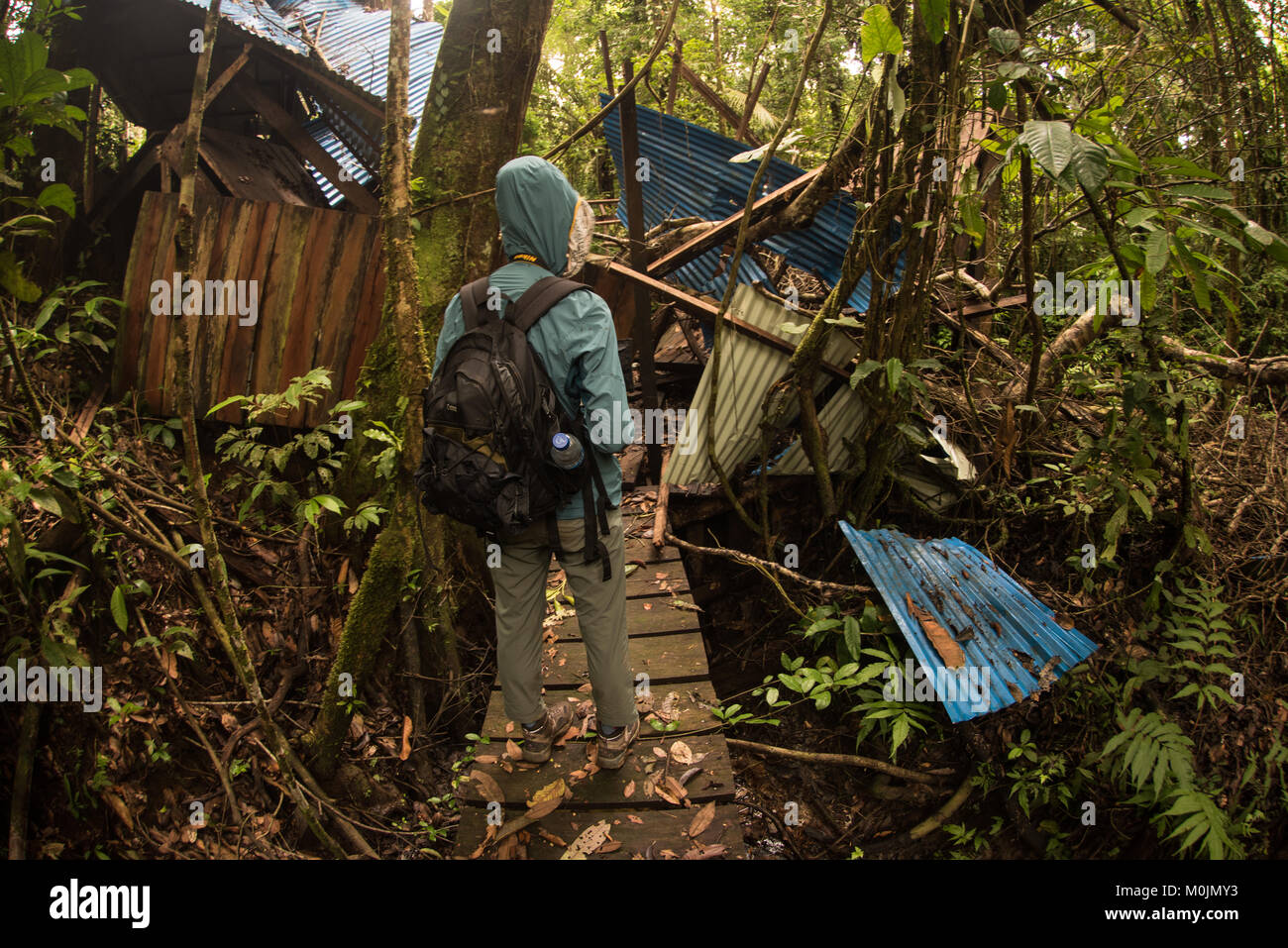 A hiker looking at a old ruined building in the Amazon rainforest that the jungle is slowly reclaiming. - Stock Image