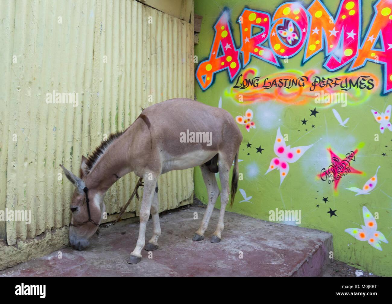 Donkey in front of a perfumery in the streets of Lamu Town, Lamu island, Kenya Stock Photo