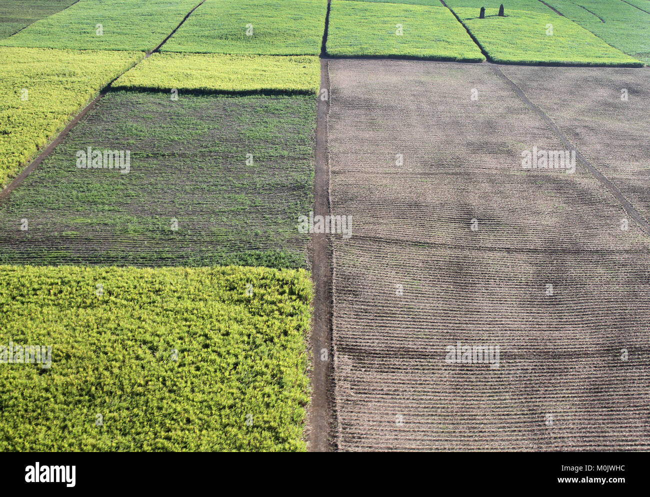 Aerial view of agricultural fields from a helicopter, The Republic of Mauritius. - Stock Image