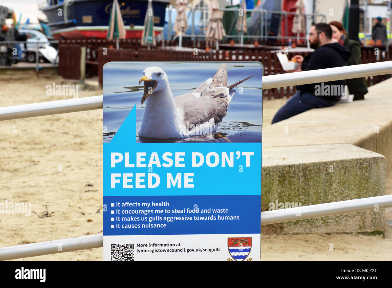 Seagull problem warning sign not to feed them as they cause a nuisance, Lyme Regis, Dorset, UK - Stock Image