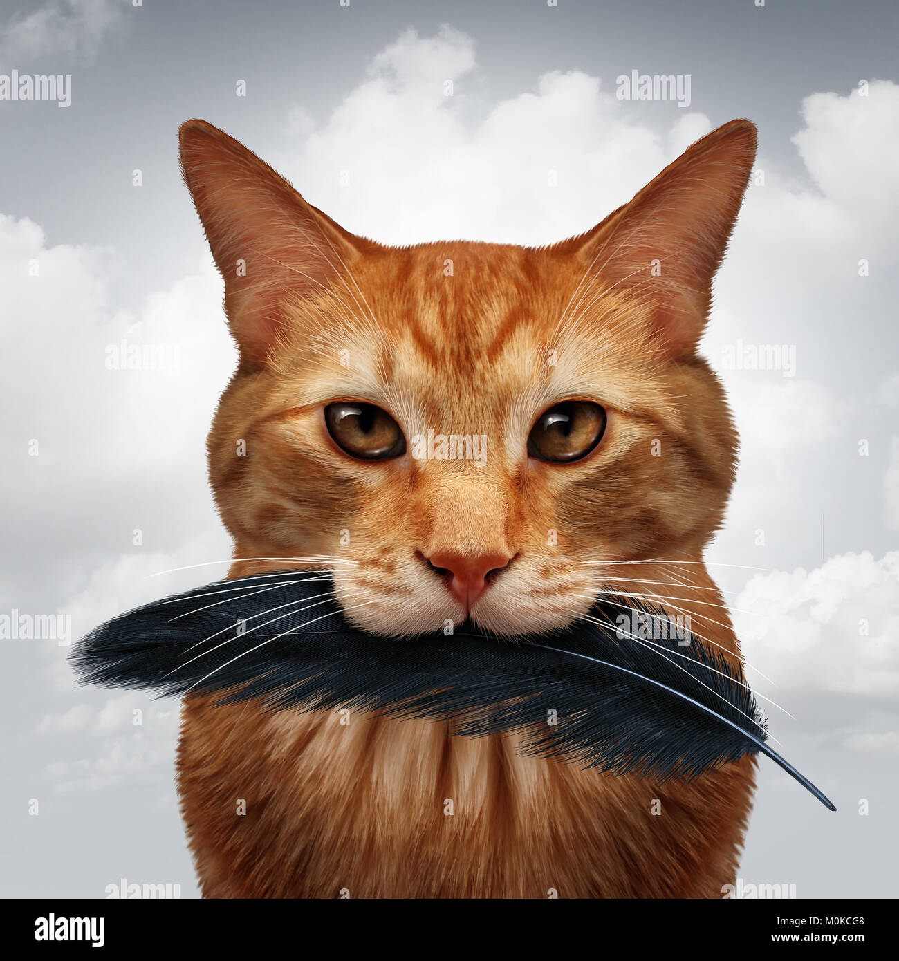 Cat behavior and killer instinct concept as a domestic feline with a black bird feather in its mouth as a metaphor - Stock Image