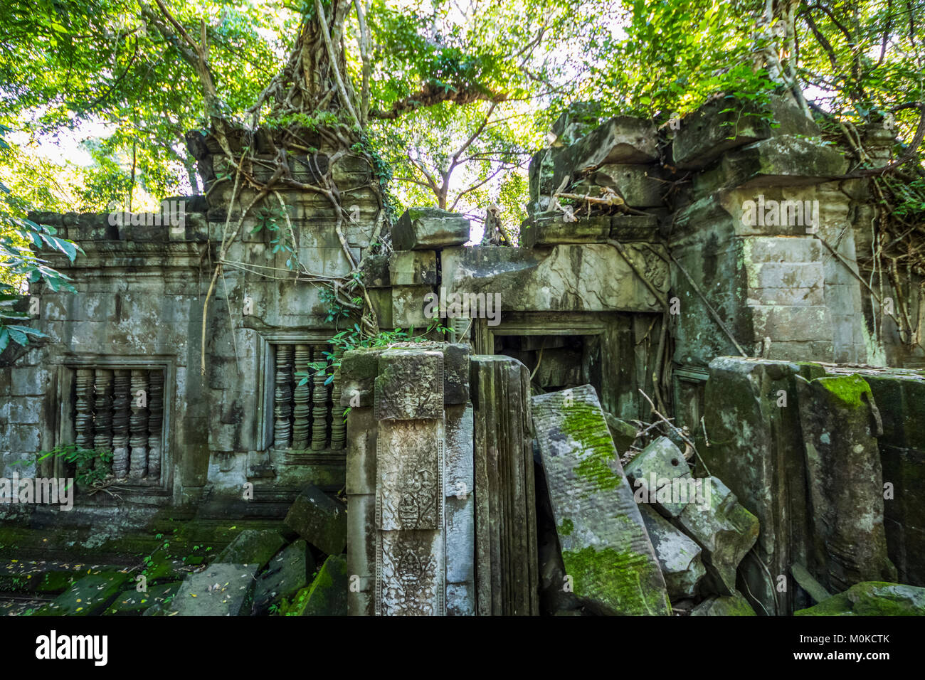 Silk cotton tree growing over the ruins of the Khmer temple of Beng Meala; Siem Reap, Cambodia - Stock Image