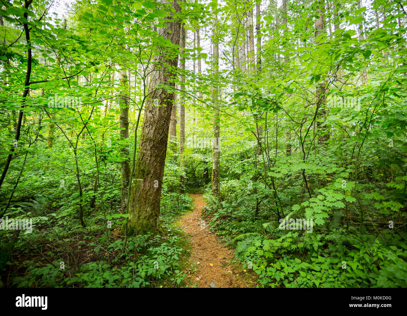 Green Timbers Forest; Surrey, British Columbia, Canada - Stock Image