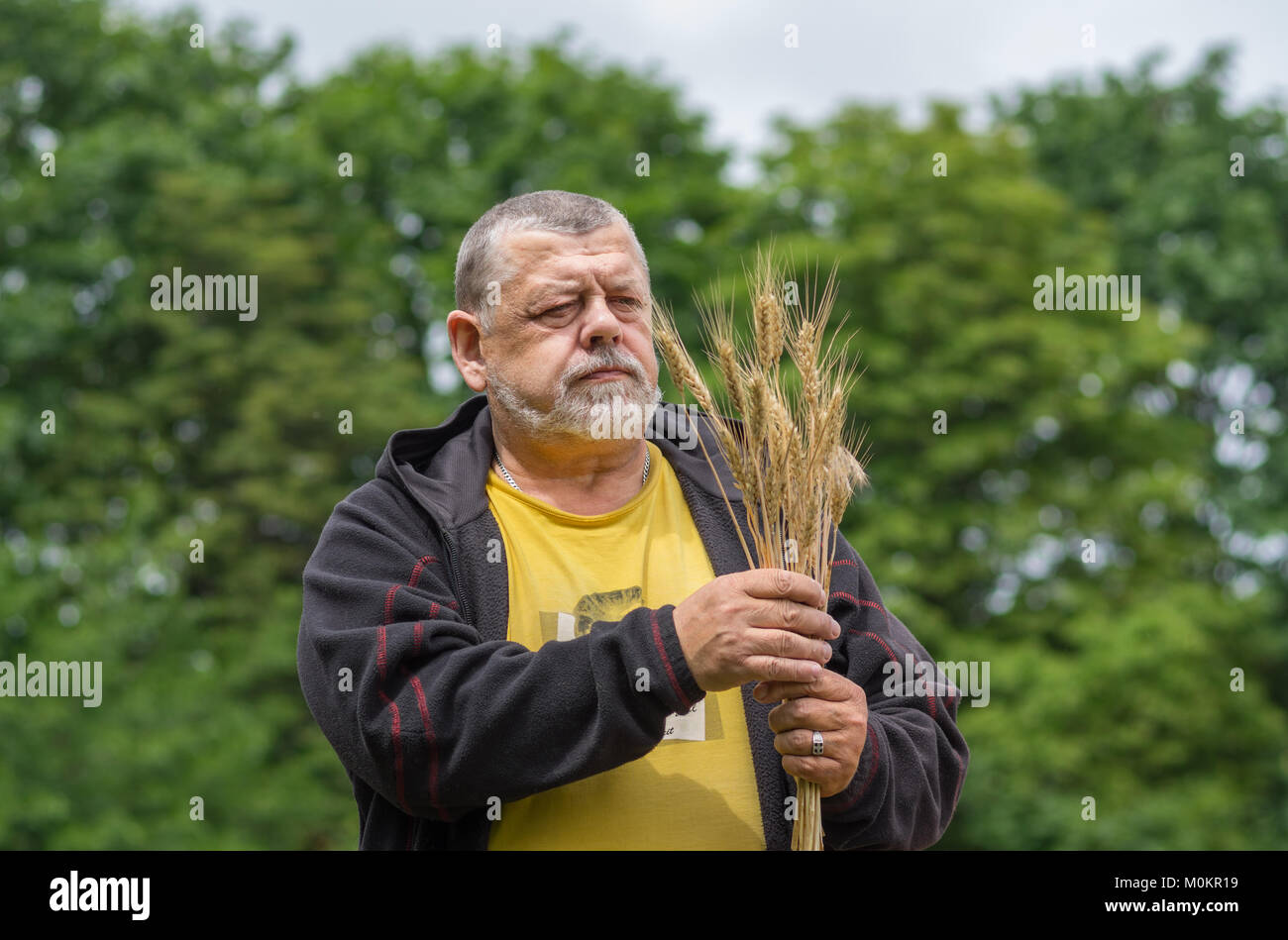 Portrait of a senior farmer with bunch of wheat spikelets - Stock Image