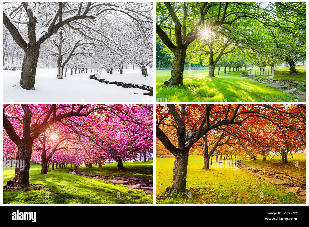 Four seasons with japanese cherry trees in Hurd Park, Dover, New Jersey - Stock Image