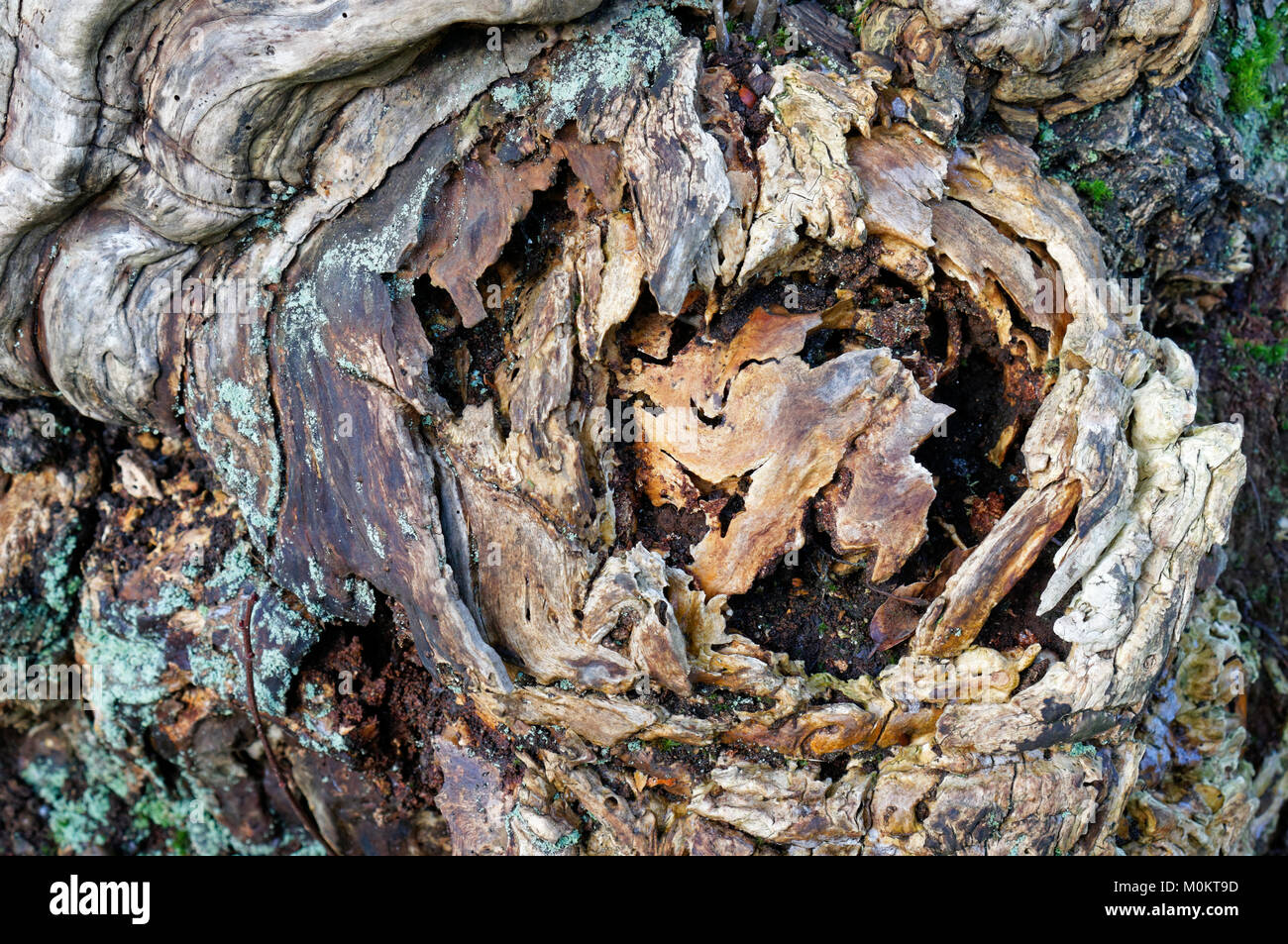 Close-up of natural patterns in a rotting tree trunk, Vancouver, BC, Canada - Stock Image
